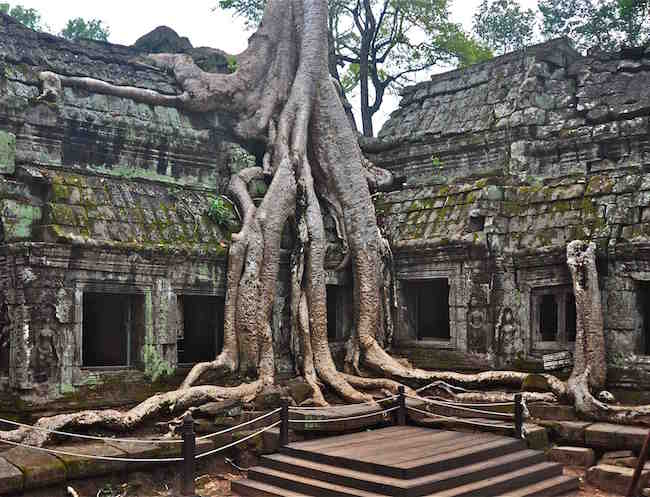 The amazing if a little creepy Ta Prohm, home of the Tomb Raider set!