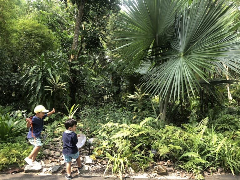 Guide to the best day out with kids in the Singapore Botanic Gardens