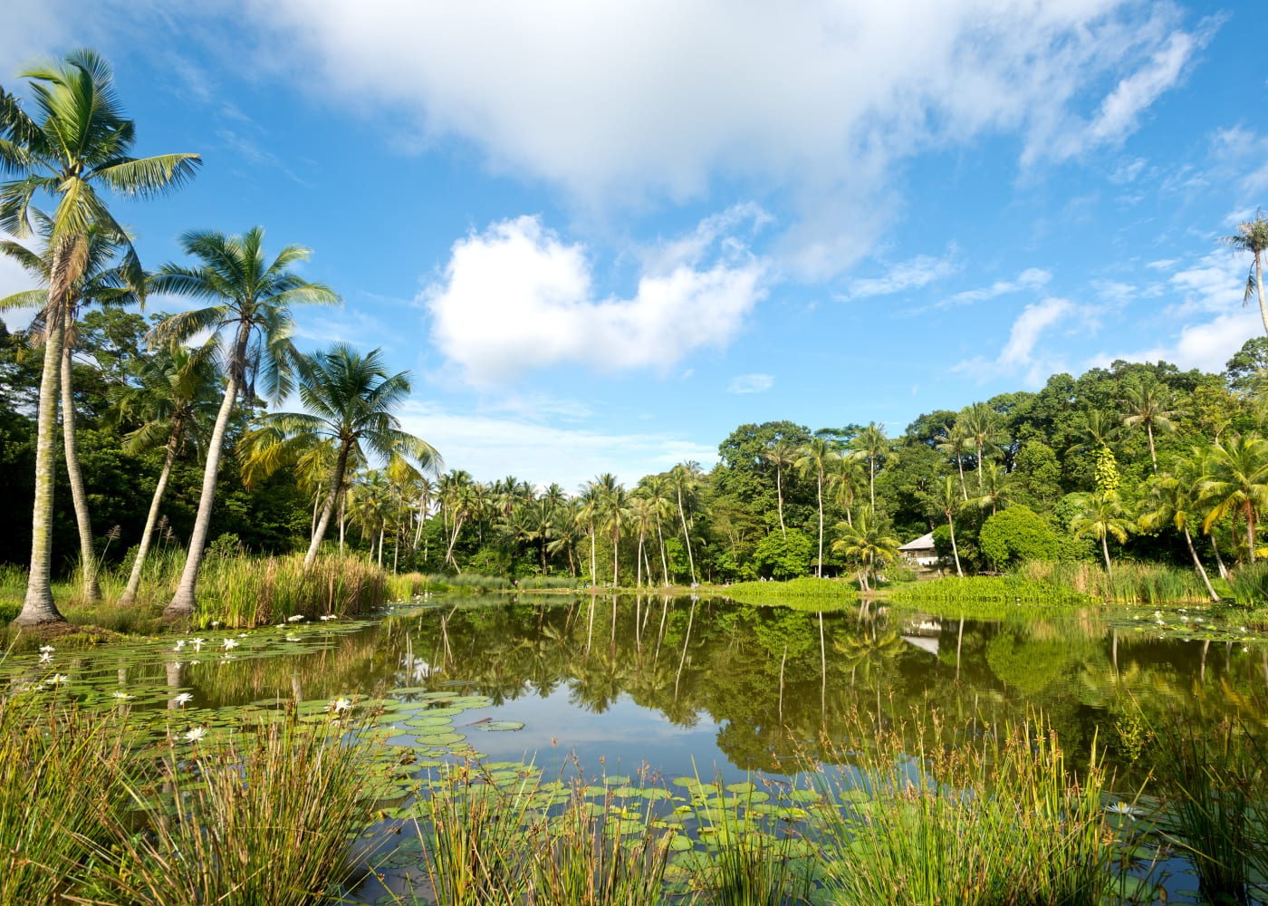 Day Trippin A Guide To All Things Pulau Ubin Honeykids Asia