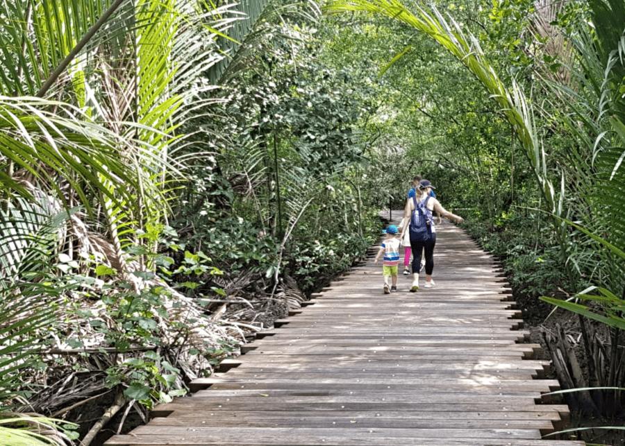 mangrove boardwalk pulau ubin singapore