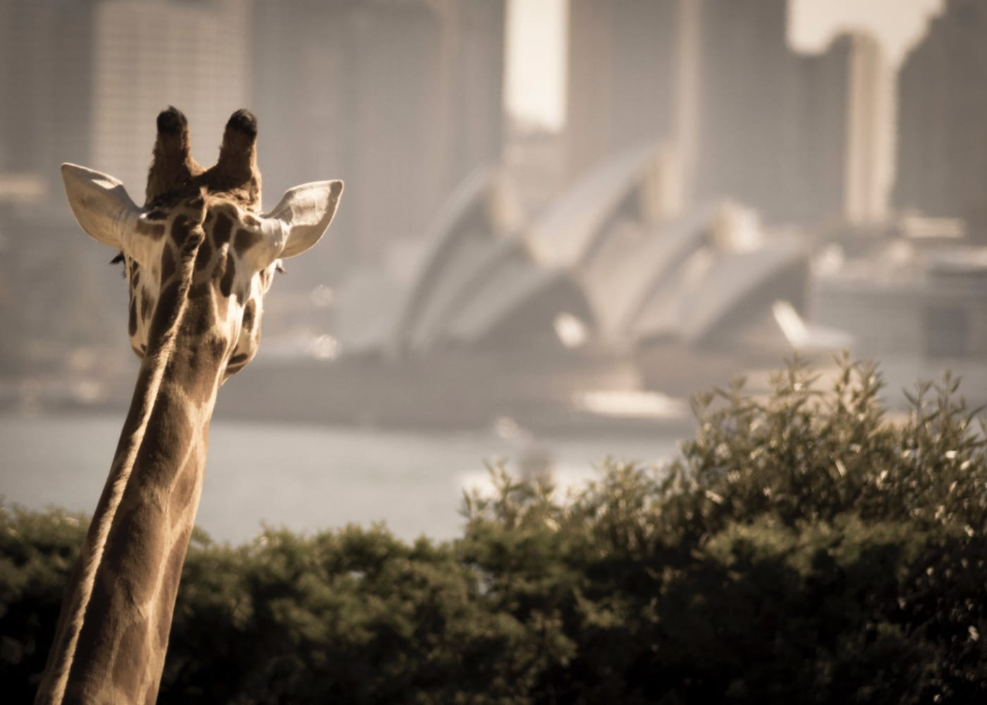 taronga zoo | 10 most family-friendly things to do in Sydney with kids